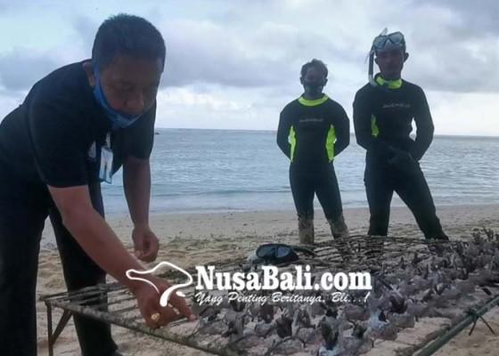 Nusabali.com - pembudidaya-karang-hias-lega-bisa-ekspor-lagi