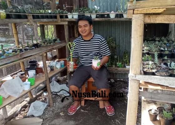 Nusabali.com - usaha-kaktus-laris-manis-di-masa-pandemi