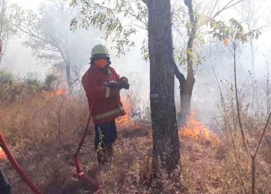 Nusabali.com - kebakaran-lahan-di-desa-sukadana