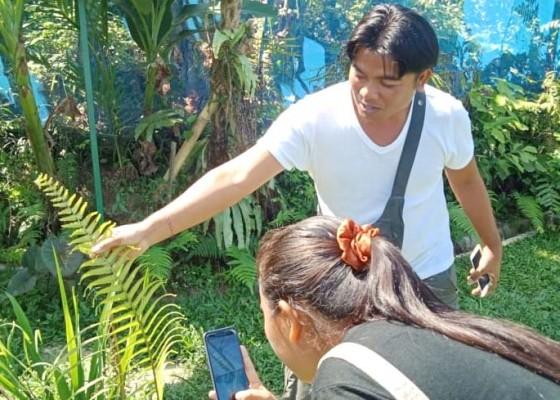 Nusabali.com - kunang-kunang-jadi-objek-wisata-baru-di-taro