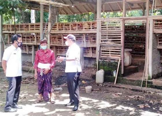 Nusabali.com - desa-taman-diproyeksikan-menjadi-sentra-peternakan