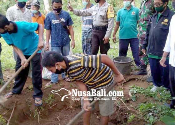 Nusabali.com - penyuluh-pertanian-abang-bagikan-tips-kalahkan-nyungah