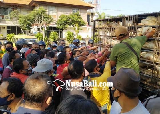 Nusabali.com - masyarakat-serbu-ayam-gratis-yang-dibagikan-peternak