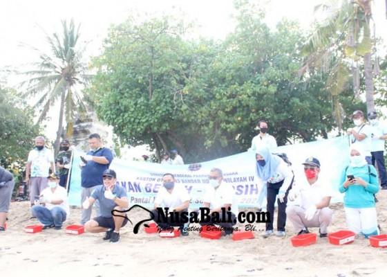 Nusabali.com - pegawai-otban-lepas-tukik-dan-bersih-pantai-kuta
