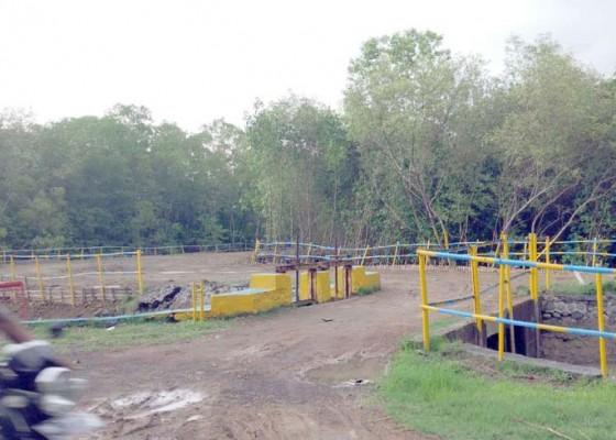 Nusabali.com - hutan-manggrove-dibabat-dewan-geram