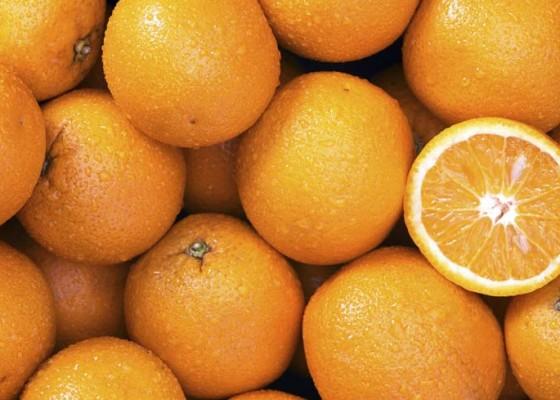 Nusabali.com - petani-kesulitan-pasarkan-jeruk-madu
