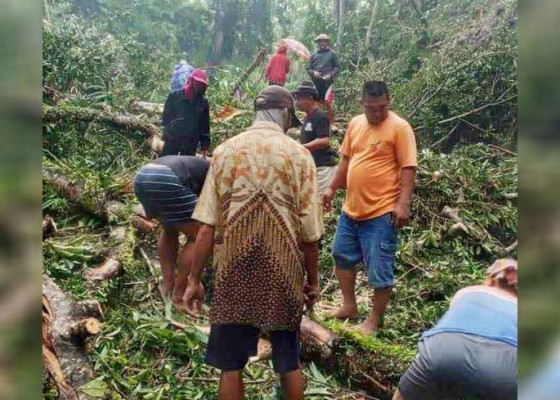 Nusabali.com - pohon-tumbang-melintang-di-jalan