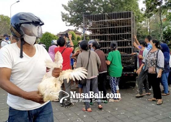 Nusabali.com - harga-anjlok-distan-segera-data-peternak-ayam