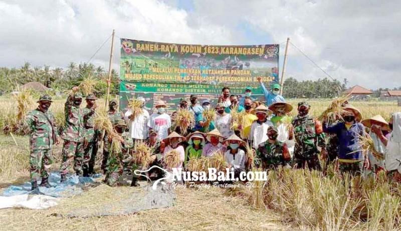 www.nusabali.com-dandim-panen-padi-di-subak-sayehan
