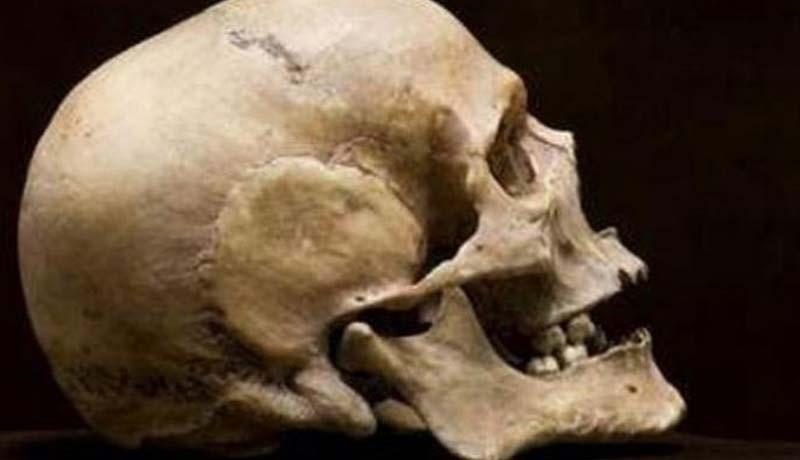 www.nusabali.com-pamedek-temukan-tengkorak-manusia-di-gunung-batukaru