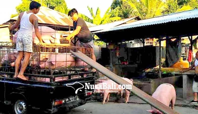 www.nusabali.com-rumah-jagal-dicek-kebersihan-dan-kesehatan-hewan