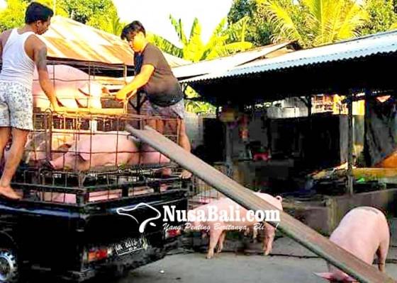 Nusabali.com - rumah-jagal-dicek-kebersihan-dan-kesehatan-hewan