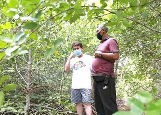 Nusabali.com - kawasan-mangrove-akan-dijadikan-lokasi-budidaya-udang
