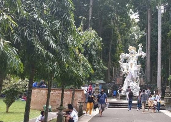 Nusabali.com - pandemi-covid-19-objek-wisata-sangeh-masih-ramai