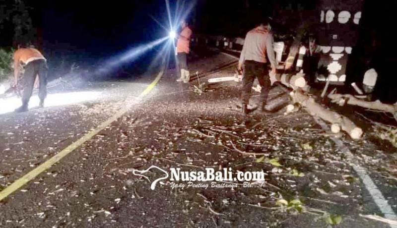 www.nusabali.com-pohon-tumbang-tutup-badan-jalan