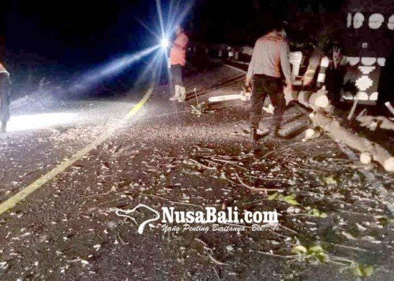 Nusabali.com - pohon-tumbang-tutup-badan-jalan