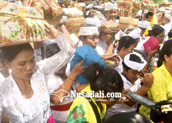 Nusabali.com - pujawali-pura-sakenan-digelar-sederhana