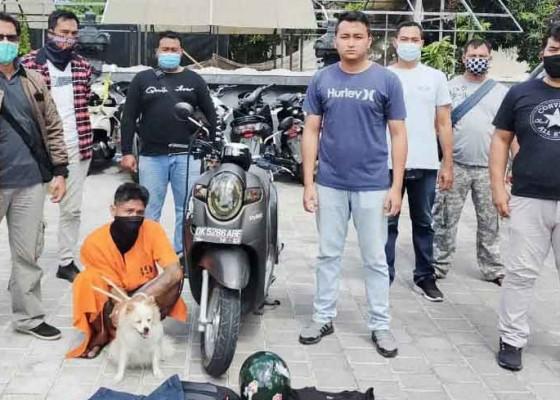 Nusabali.com - baru-4-bulan-bebas-asimilasi-ditangkap-lagi-karena-nyuri-anjing