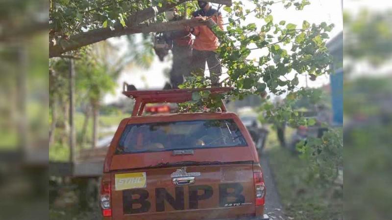 www.nusabali.com-waru-tumbang-halangi-jalan