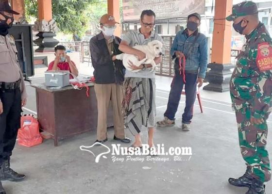 Nusabali.com - pandemi-vaksinasi-rabies-stanby-di-balai-banjar