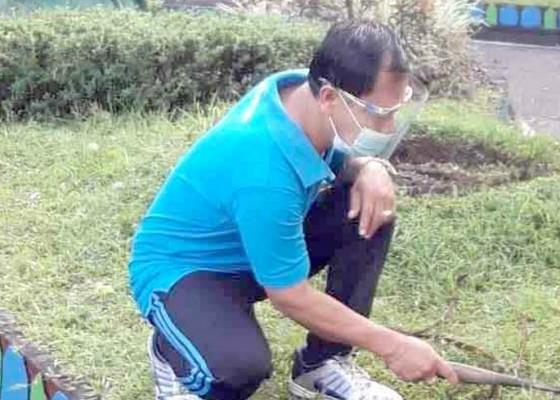 Nusabali.com - petugas-di-smpn-2-selat-kewalahan-rawat-sekolah