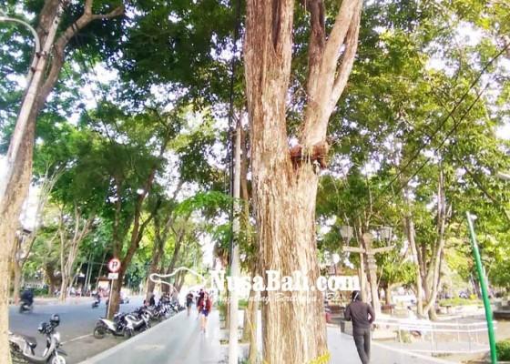 Nusabali.com - 50000-pohon-perindang-di-denpasar-diasuransikan