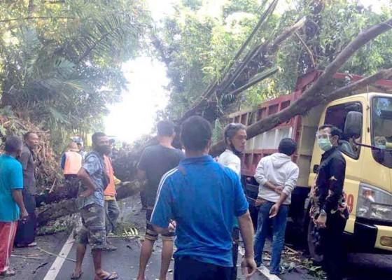 Nusabali.com - truk-tertindih-pohon-aren