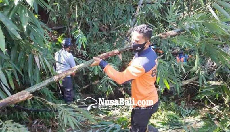 www.nusabali.com-pohon-tumbang-timpa-kabel-listrik