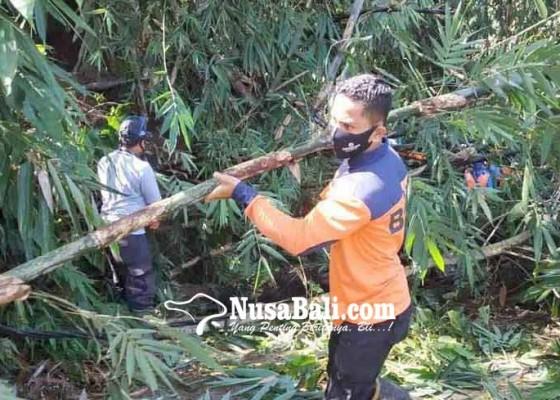 Nusabali.com - pohon-tumbang-timpa-kabel-listrik