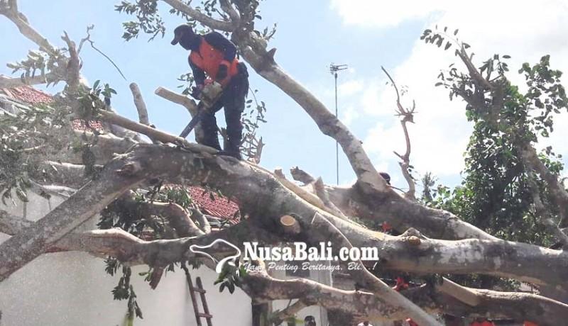www.nusabali.com-kerugian-pohon-tumbang-dan-longsor-rp-1-miliar-lebih