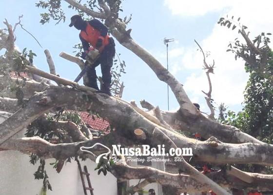 Nusabali.com - kerugian-pohon-tumbang-dan-longsor-rp-1-miliar-lebih