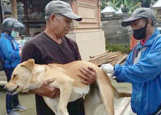 Nusabali.com - vaksinasi-rabies-sudah-sasar-15223-anjing