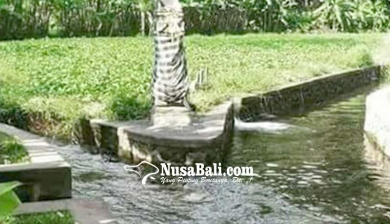 www.nusabali.com-diterjang-hujan-saluran-irigasi-rusak