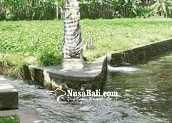 Nusabali.com - diterjang-hujan-saluran-irigasi-rusak