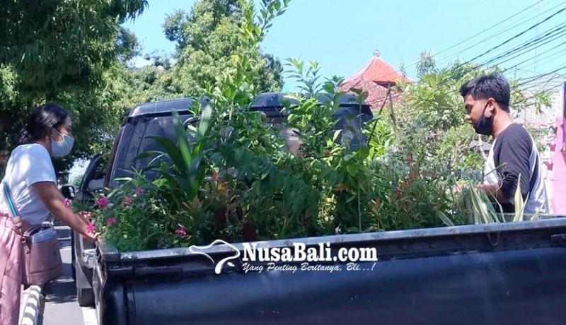 www.nusabali.com-pandemi-penghobi-bonsai-meningkat