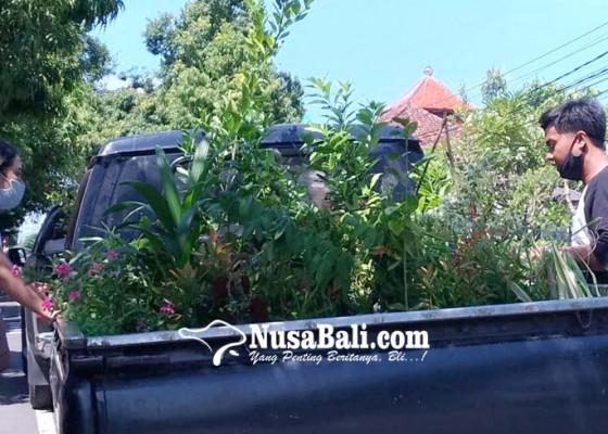 Nusabali.com - pandemi-penghobi-bonsai-meningkat
