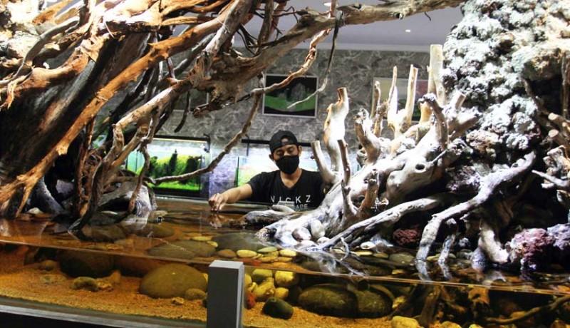 www.nusabali.com-bisnis-aquascape-meningkat-di-masa-pandemi