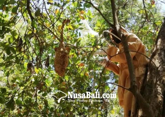 Nusabali.com - binatang-buas-masuk-ranah-penanganan-damkar