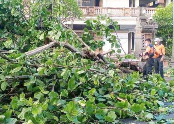 Nusabali.com - diseruduk-truk-ketapang-tumbang