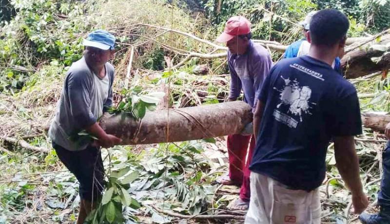 www.nusabali.com-dapur-tertimpa-pohon-tumbang