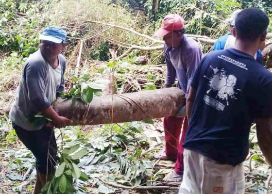 Nusabali.com - dapur-tertimpa-pohon-tumbang