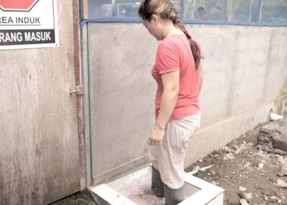 Nusabali.com - peternak-gunakan-internet-gratis-untuk-biosecurity