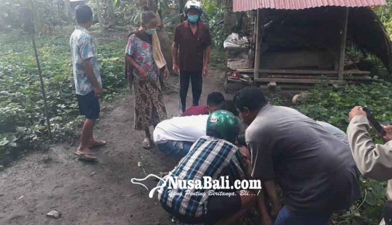 www.nusabali.com-buruh-panjat-kelapa-tewas-jatuh-dari-pohon