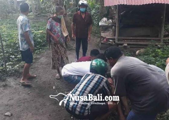Nusabali.com - buruh-panjat-kelapa-tewas-jatuh-dari-pohon
