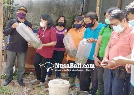 Nusabali.com - dpkp-gelontor-bibit-ikan-nila-untuk-krama-renon