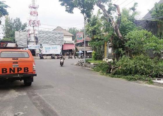 Nusabali.com - diguyur-hujan-pohon-tumbang-timpa-kabel-pln-di-seminyak