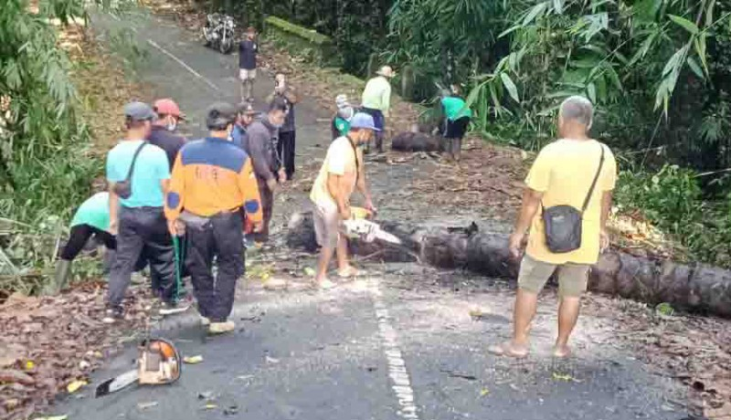 www.nusabali.com-pohon-tumbang-tutup-jalan-menuju-pura-dalem-bebalang-carangsari
