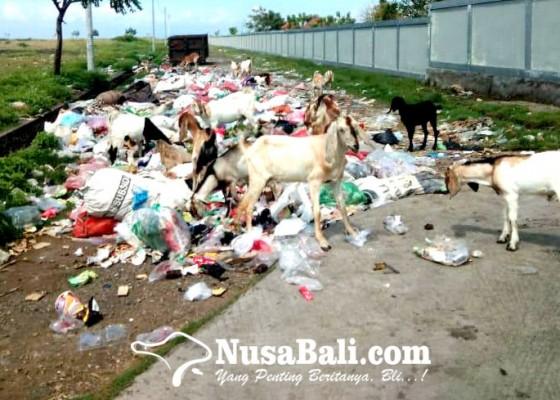 Nusabali.com - sampah-berserakan-dikerumuni-kambing
