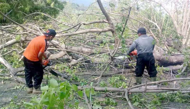 www.nusabali.com-pohon-santen-tumbang-timpa-kabel-listrik