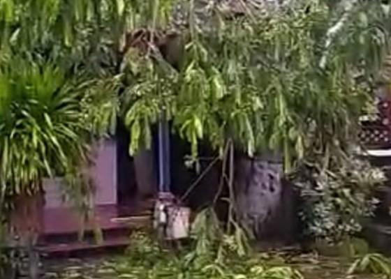 Nusabali.com - pohon-15-meter-tumbang-timpa-rumah-warga-klungkung
